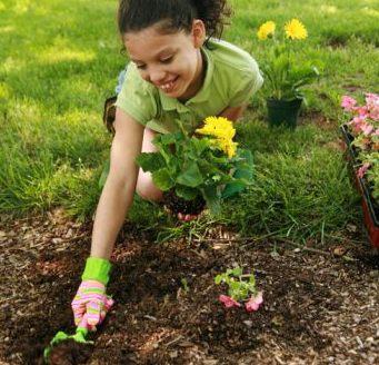 Como plantar uma planta
