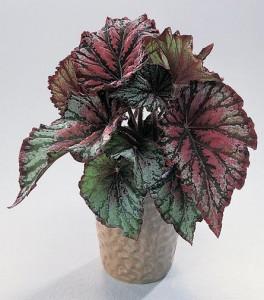 Planta para interiores guia dos casados - Tipos de plantas de interior ...